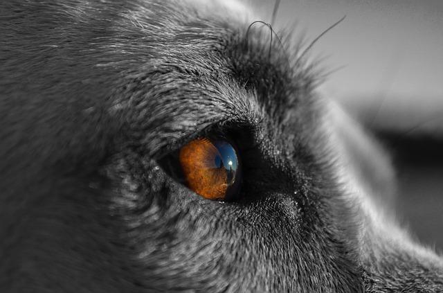 canine-863032_640