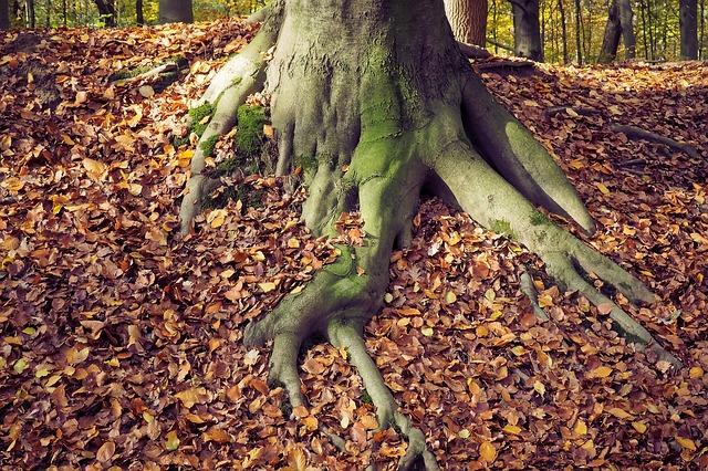 autumn-1827212_640